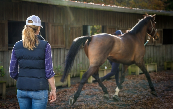 lameness and poor performance evaluation_equine sports medicine