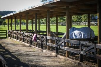 Outdoor yards - Equine Sports Medicine and Rehab Centre