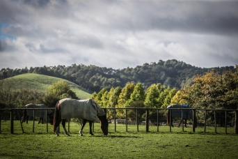 paddocks - Equine Sports Medicine and Rehab Centre